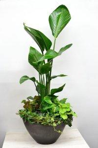 観葉植物17(観葉寄せ)