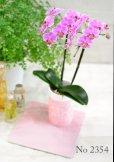 画像3: Original  Phalaenopsis -Pink-