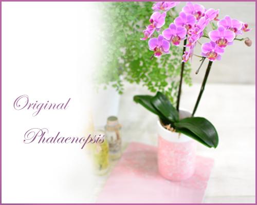 画像1: Original  Phalaenopsis -Pink-