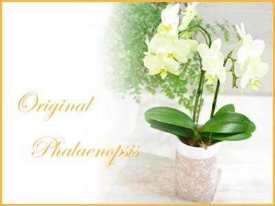 画像1: Original  Phalaenopsis -Yellow ・ Orange -